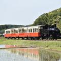 Photos: 小湊鐵道 里山トロッコ5号