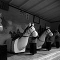 Photos: 今も駆ける木馬たち