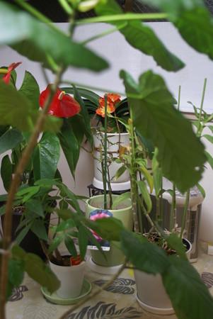会社の観葉植物たち