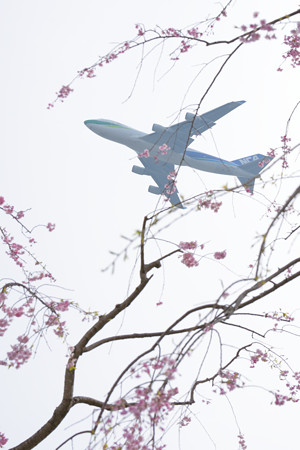 しだれ桜とNCA JA04KZ