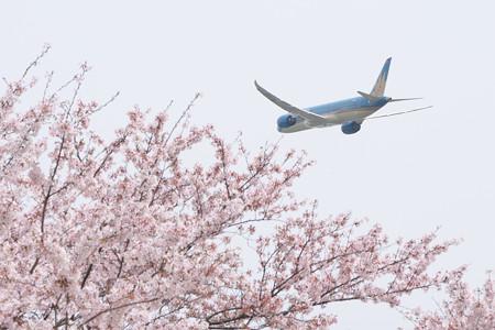 桜の束へ消え行く