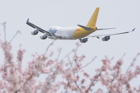 桜の海の上を飛行中