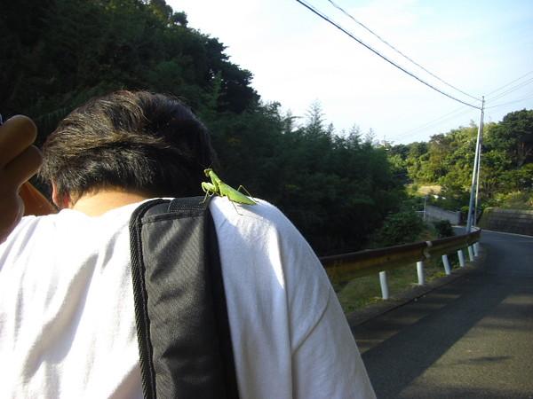カマキリ on tonojiさん