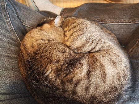 猫は胡座で丸くなる…