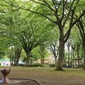 平和公園・深緑02-12.07.09