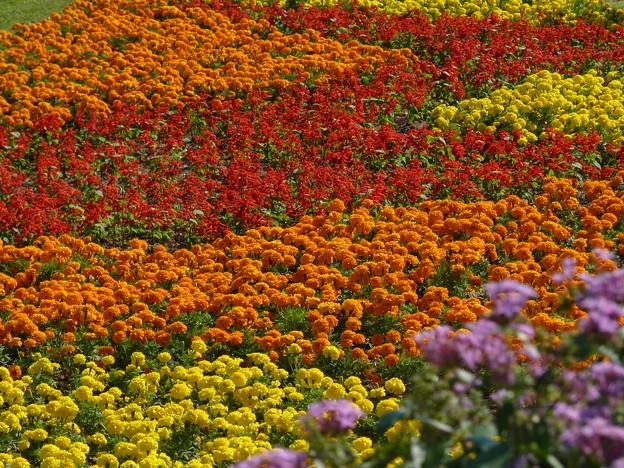 写真: お花畑は~いかがですか・・・