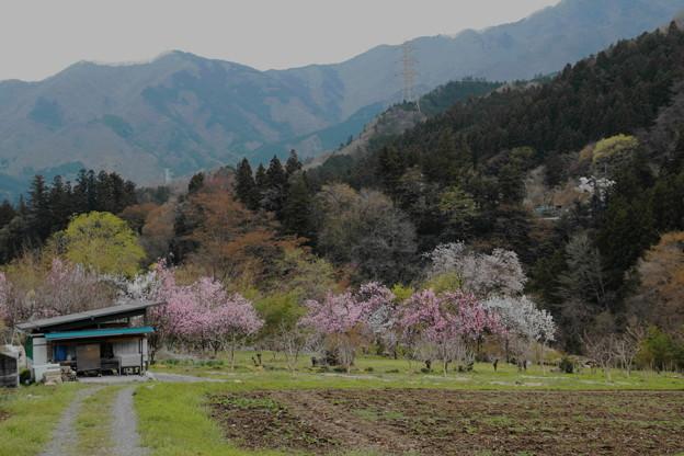 秩父路の春の風景