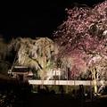 清雲寺境内枝垂れ桜のライトアップ
