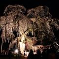 山門の前の枝垂れ桜のライトアップ