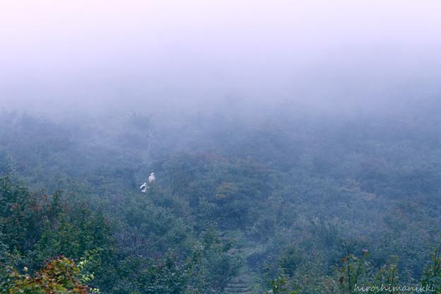 霧の山08 霧の山