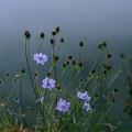 写真: 霧の山15 霧の帳
