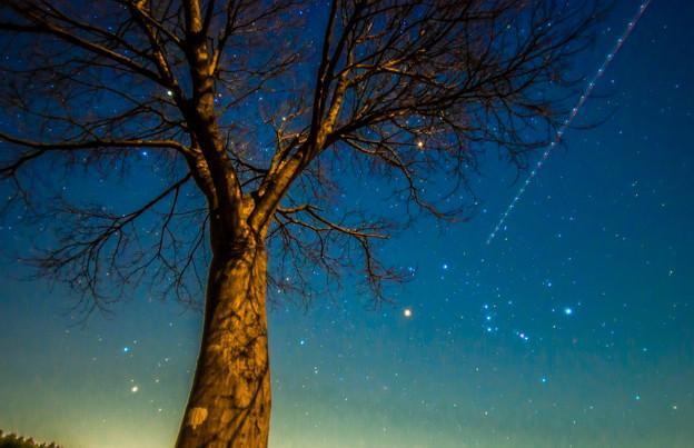 写真: 星の楽園