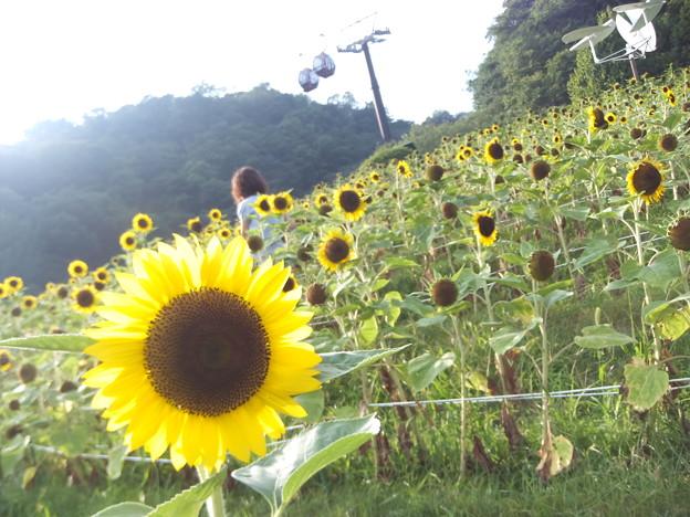 Photos: 太陽