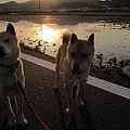 写真: もみじ_5904