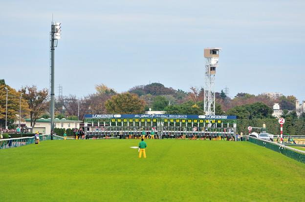 ジャパンカップ スタート前