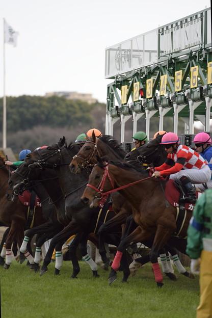 中山記念2016 発馬直後