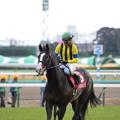 Photos: 一昨年の皐月賞馬 イスラボニータ号
