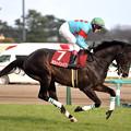 Photos: 中山記念 返し馬 ラストインパクト