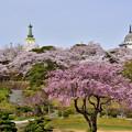 Photos: 花の名古山公園