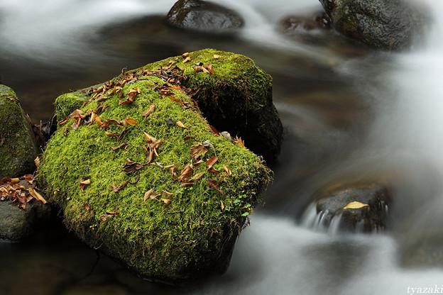 晩秋の渓流1