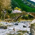 写真: 石橋と桜
