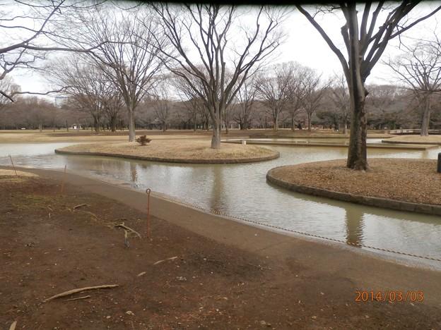 代々木公園の光景 1