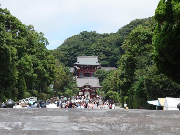 Photos: 鶴岡八幡宮 (神奈川県鎌倉市雪ノ下)