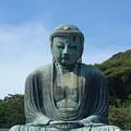 Photos: 鎌倉の大仏 (神奈川県鎌倉市長谷)