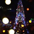 写真: :*:・'゚☆Merry Christmas.:*:・'☆'・:*:.。.:*:・'゚:*:・'゚☆