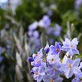 Photos: 紫の小花