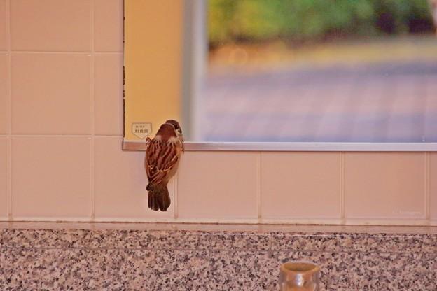 鳥撮り隊 -鏡よ鏡よ鏡さん-