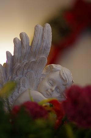 夢見る天使。