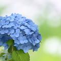 Photos: For You Blue