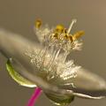 Photos: Jewelry.flower