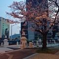 猿猴橋 南詰 広島市南区的場町1丁目 2016年3月31日