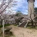 鯛の宮神社 Tainomiya Shrine 境内 呉市西三津田町 2016年4月5日