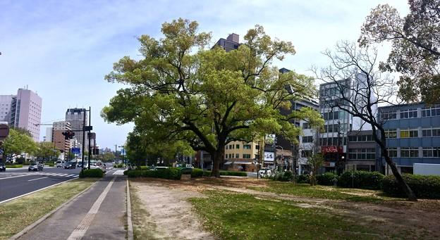 平和大通り 並木通り入口交差点 広島市中区小町