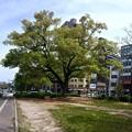 Photos: 平和大通り 並木通り入口交差点 広島市中区小町