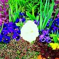 Photos: 主に従う道は花咲き香り 御霊の木の実は豊かにみのる