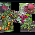 果実の季節
