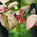 秋色の葉 1