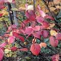 Photos: 秋色の葉 2