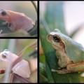 Photos: herpetology