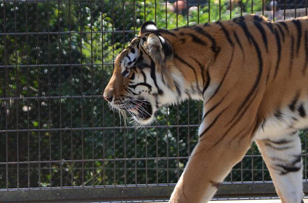 猛獣館299 日本平動物園 2014 09 14