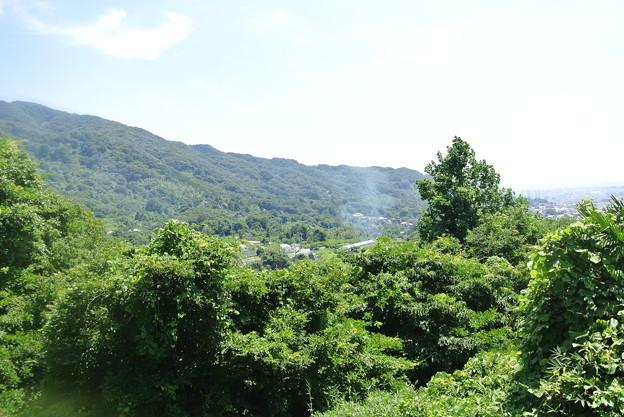 農免道路から高安山方向を望む (2)