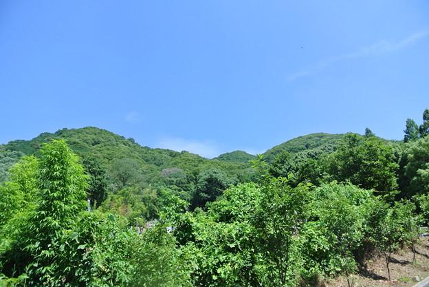 来迎寺付近から山を見る