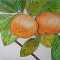 しあわせの村の柿