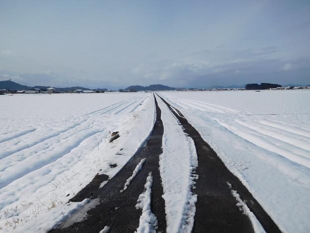 蒲生野雪景 (1)