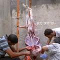 Photos: 羊の中を洗います