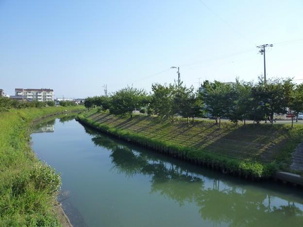 P1050214 川のみち
